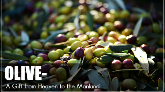 olive manufacturers